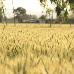 melbourne land prices